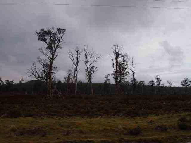 2012年出走澳洲18天﹣ 塔斯曼尼亞 ﹣ 搖籃山